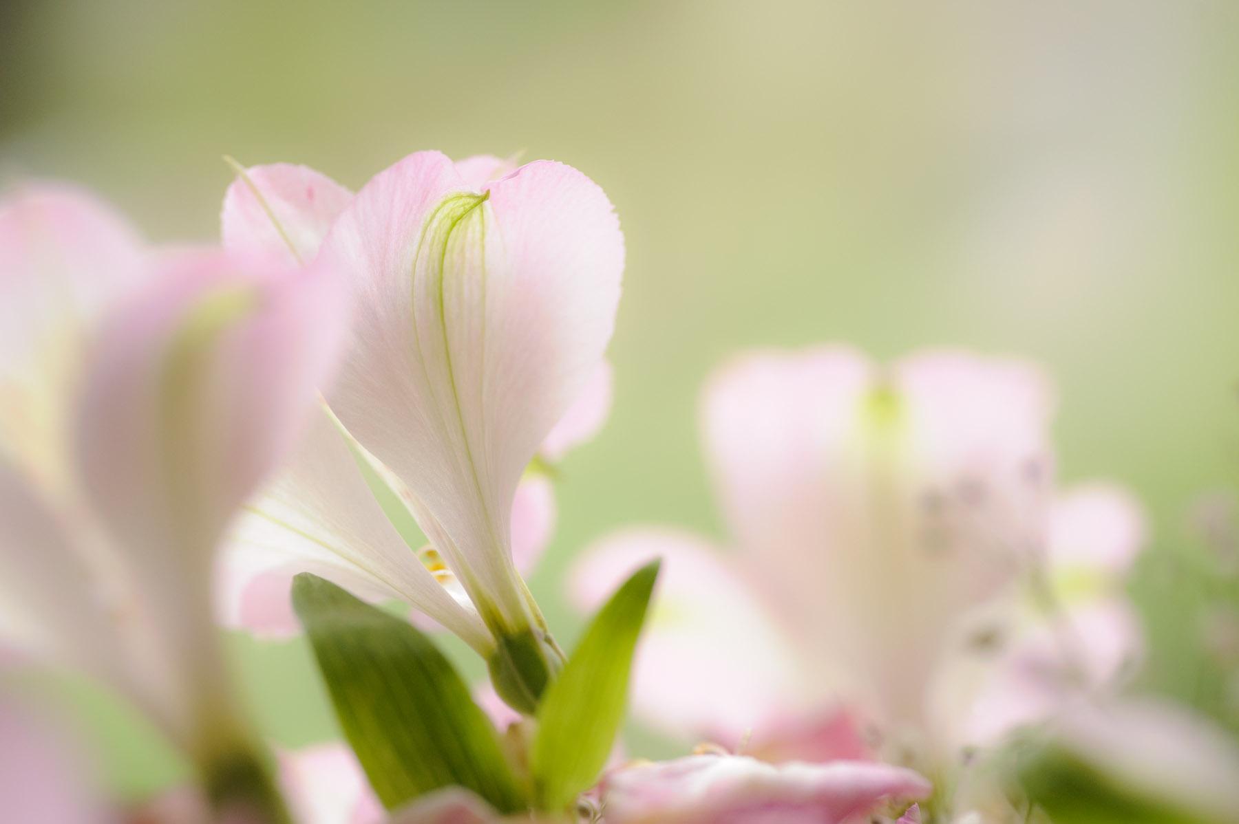 Does Aspirin In Water Keep Flowers Fresh