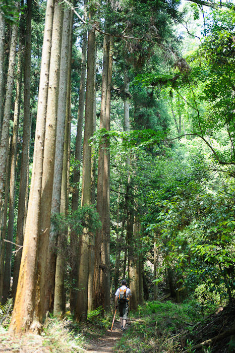 This, I Can Handle tall trees, slightly sloping path  --  Kyoto, Japan  --  Copyright 2012 Jeffrey Friedl, http://regex.info/blog/
