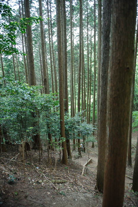 He's Down There Somewhere  --  Kyoto, Japan  --  Copyright 2012 Jeffrey Friedl, http://regex.info/blog/