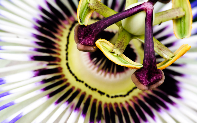 desktop background image of a freaky flower in Kyoto, Japan  --  Copyright 2012 Jeffrey Friedl, http://regex.info/blog/