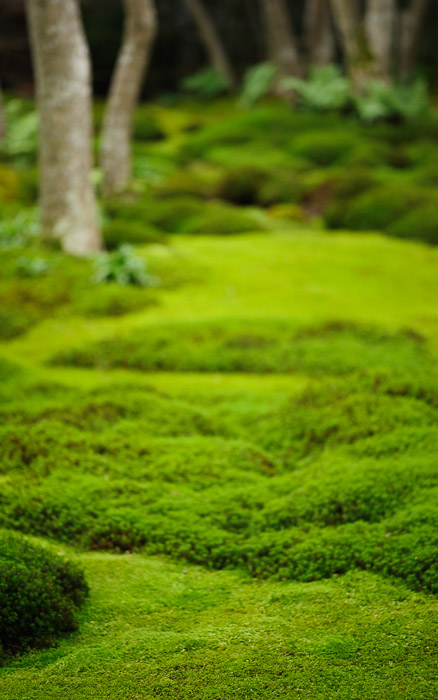 desktop background image of moss at the Gioji Temple (), Kyoto Japan  --  shot #3 First Shot of the Garden My first inclination was apparently to go vertical  --  Gioji Temple ()  --  Copyright 2012 Jeffrey Friedl, http://regex.info/blog/