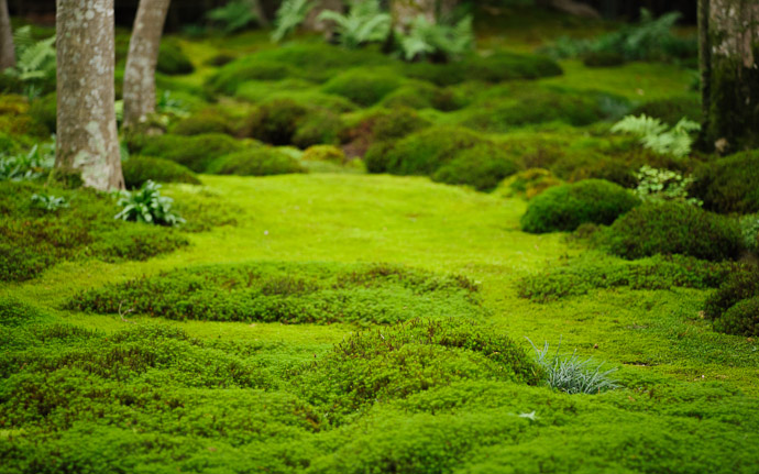 desktop background image of moss at the Gioji Temple (), Kyoto Japan  --  shot #5 Lumps and Bumps make for many unique views  --  Gioji Temple ()  --  Copyright 2012 Jeffrey Friedl, http://regex.info/blog/