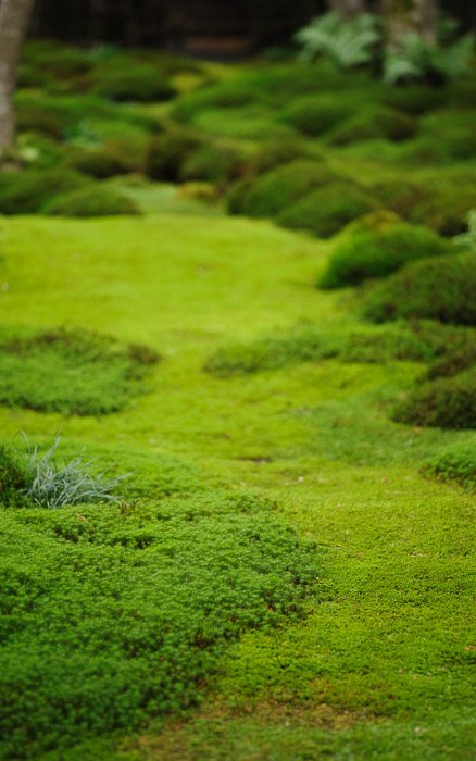 desktop background image of moss at the Gioji Temple (), Kyoto Japan  --  shot #7 &#8220;Winding Path&#8221; Vibe Not sure whether it works, but that's what I had in mind  --  Gioji Temple ()  --  Copyright 2012 Jeffrey Friedl, http://regex.info/blog/