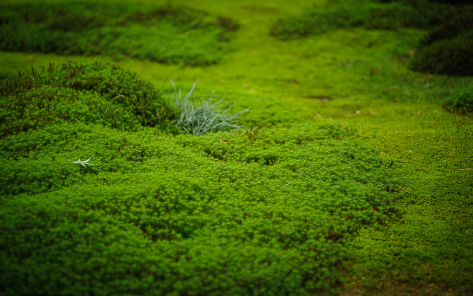 desktop background image of moss at the Gioji Temple (), Kyoto Japan  --  shot #8 &#8220;Subtle Detail&#8221; Vibe It's not much in a thumbnail, but full screen it has a lot of nice detail  --  Gioji Temple ()  --  Copyright 2012 Jeffrey Friedl, http://regex.info/blog/