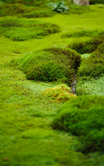 desktop background image of moss at the Gioji Temple (), Kyoto Japan  --  shot #10 Little Stream you can barely tell what it is  --  Gioji Temple ()  --  Copyright 2012 Jeffrey Friedl, http://regex.info/blog/