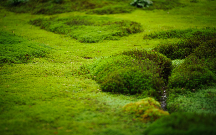 desktop background image of moss at the Gioji Temple (), Kyoto Japan  --  shot #11 This One is Nicer because it doesn't rely on the stream  --  Gioji Temple ()  --  Copyright 2012 Jeffrey Friedl, http://regex.info/blog/