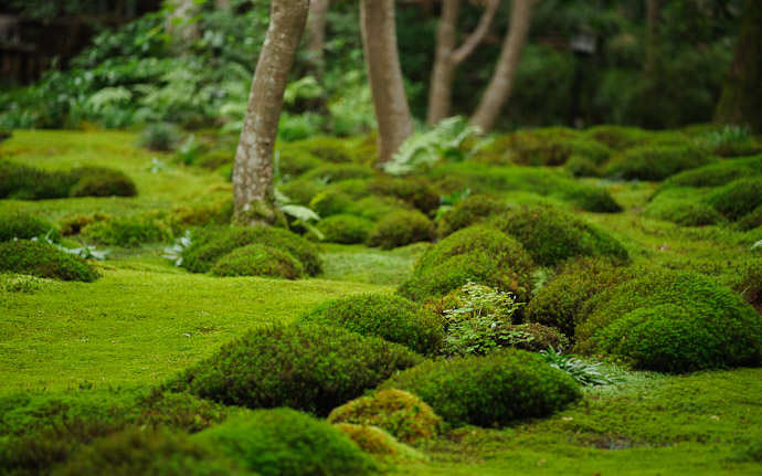 desktop background image of moss at the Gioji Temple (), Kyoto Japan  --  shot #13 But First... this lower-angle view is nice  --  Gioji Temple ()  --  Copyright 2012 Jeffrey Friedl, http://regex.info/blog/