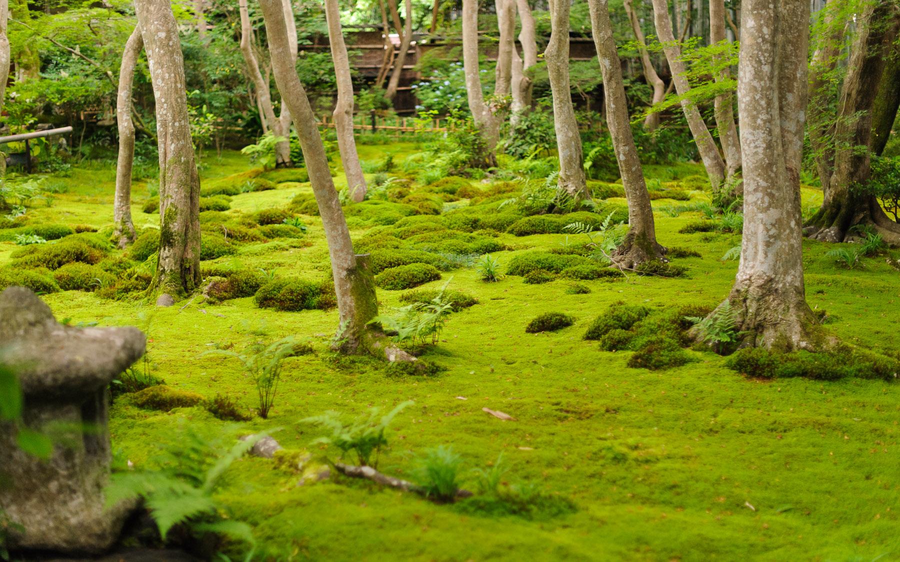 Kyoto moss garden garden ftempo - Moosgarten kyoto ...