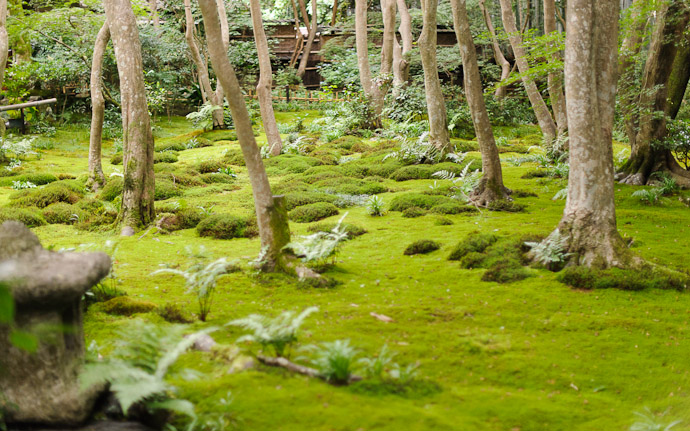 Gioji Temple (祇王寺)  --  Kyoto, Japan  --  Copyright 2012 Jeffrey Friedl, http://regex.info/blog/