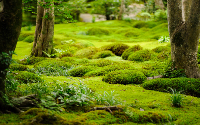 desktop background image of a garden/moss scene at the Gioji Temple (祇王寺), Kyoto Japan  --  Zones  --  Gioji Temple (祇王寺)  --  Copyright 2012 Jeffrey Friedl, http://regex.info/blog/