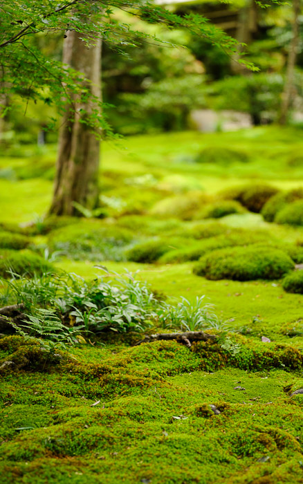 desktop background image of a garden/moss scene at the Gioji Temple (祇王寺), Kyoto Japan  --  Gioji Temple (祇王寺)  --  Copyright 2012 Jeffrey Friedl, http://regex.info/blog/