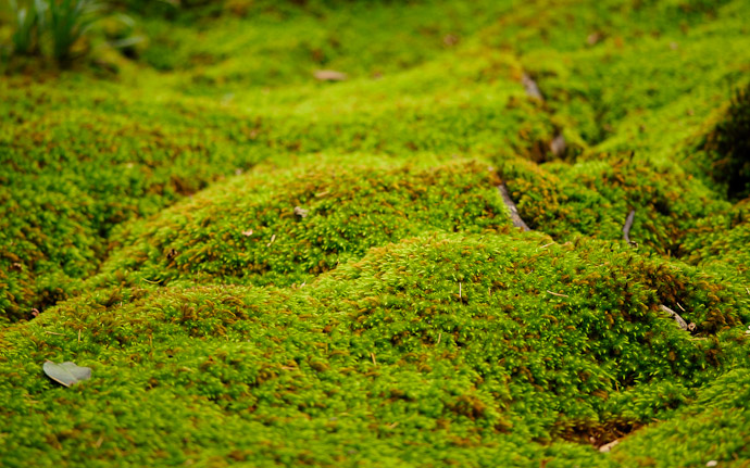 desktop background image of a garden/moss scene at the Gioji Temple (祇王寺), Kyoto Japan  --  Waves  --  Gioji Temple (祇王寺)  --  Copyright 2012 Jeffrey Friedl, http://regex.info/blog/