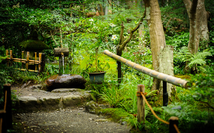 desktop background image of a garden/moss scene at the Gioji Temple (祇王寺), Kyoto Japan  --  Busy Path  --  Gioji Temple (祇王寺)  --  Copyright 2012 Jeffrey Friedl, http://regex.info/blog/