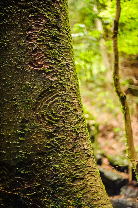 Alien Crop Patterns  --  Kuuya-taki Waterfall (空也滝)  --  Kyoto, Japan  --  Copyright 2012 Jeffrey Friedl, http://regex.info/blog/