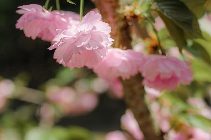 Kyoto, Japan -- Copyright 2015 Jeffrey Friedl, http://regex.info/blog/