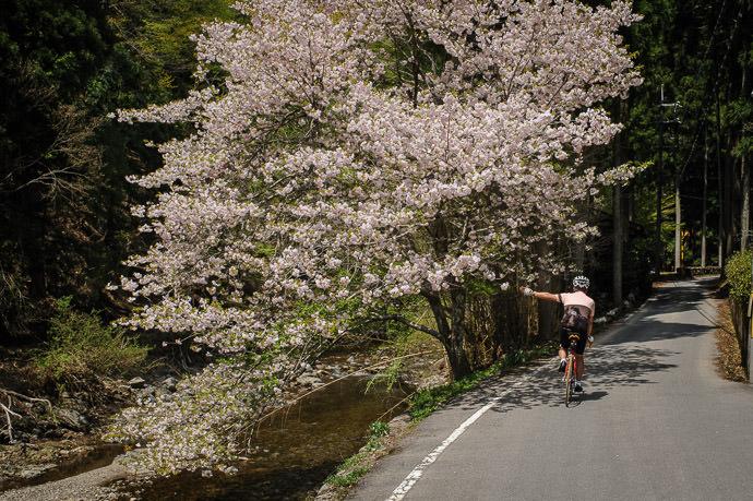 11:44am - taken while moving at 11 kph (7 mph) -- Kyoto, Japan -- Copyright 2015 Jeffrey Friedl, http://regex.info/blog/