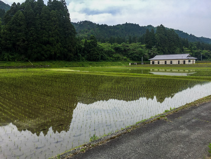 Rice-Planting Season -- Takashima, Shiga, Japan -- Copyright 2016 Jeffrey Friedl, http://regex.info/blog/ -- This photo is licensed to the public under the Creative Commons Attribution-NonCommercial 4.0 International License http://creativecommons.org/licenses/by-nc/4.0/ (non-commercial use is freely allowed if proper attribution is given, including a link back to this page on http://regex.info/ when used online)
