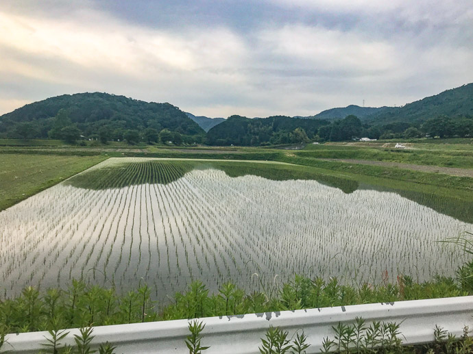 Newly-Planted Rice lots of this in Kameoka -- Kameoka, Kyoto, Japan -- Copyright 2018 Jeffrey Friedl, http://regex.info/blog/