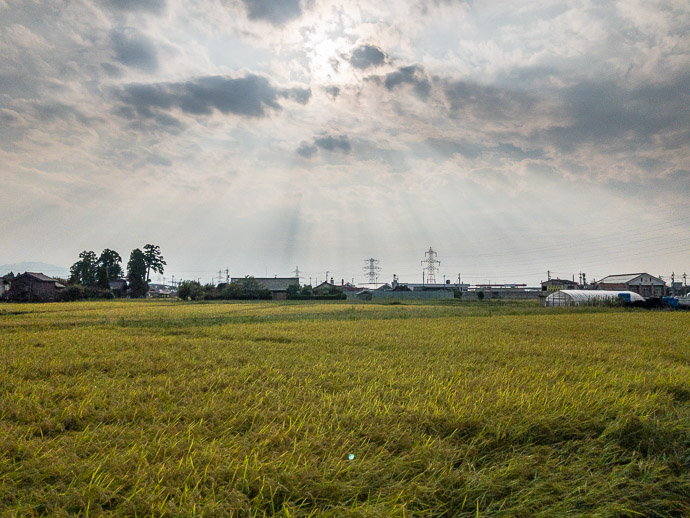 Rice Fields at the Edge of the City taken at 32 kph (20 mph) -- Toyama, Japan -- Copyright 2018 Jeffrey Friedl, http://regex.info/blog/