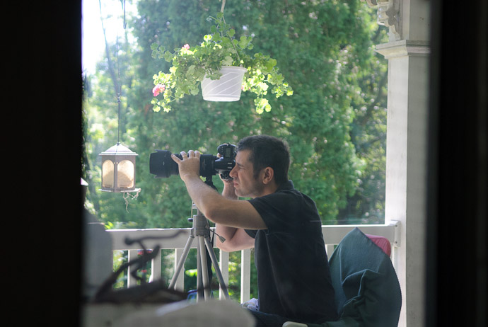 Photo by Marci Kreta taken through a window covered with netting, as seen here -- Rootstown, Ohio, USA -- Copyright 2010 Marci Kreta