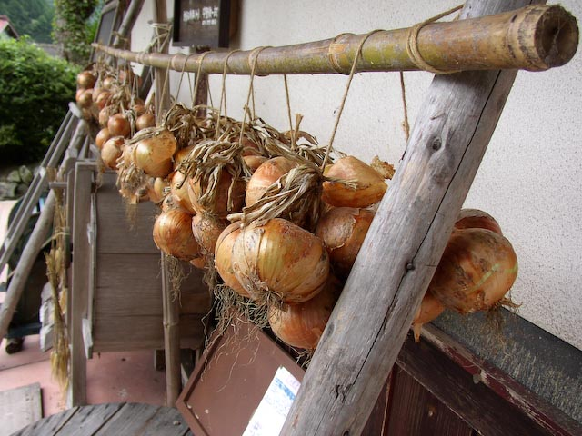 1 / 80 sec, f/2.9, ISO 60 — full exif Onions -- Copyright 2006 Katsunori Shimada, http://regex.info/blog/