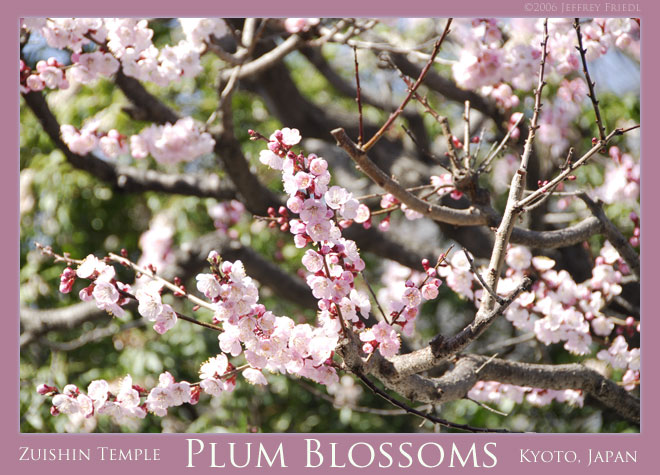 Plum blossoms at the Zuishin-in Temple, Yamashina ward, Kyoto, Japan
