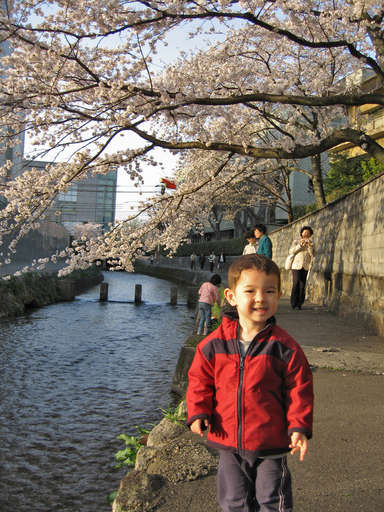 Anthony standing next to the Shirakawa River, under cherry blossoms, in Kyoto, Japan, April 2005