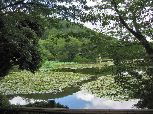The lake at Ryouanji in the summer, Kyoto Japan