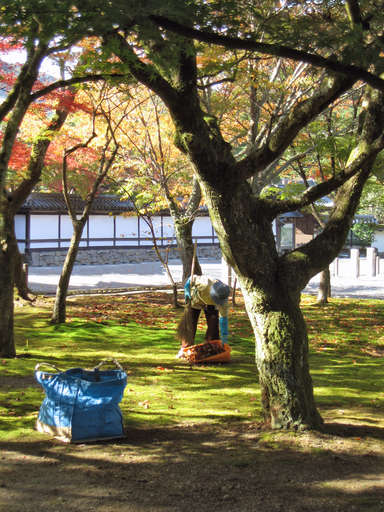 Worker cleaning leaves at the Nanzen Temple (Nanzenji) in Kyoto, Japan