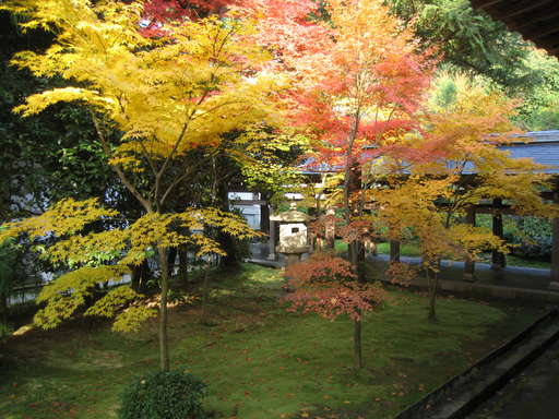 Garden at Ryouanji in the fall, Kyoto Japan