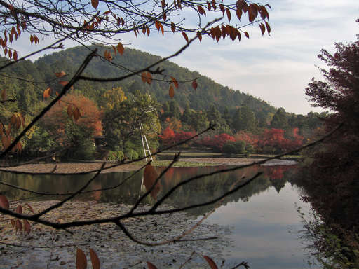 The lake at Ryouanji in the fall, Kyoto Japan