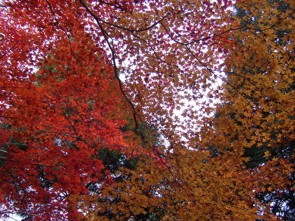 Kyoto Leaves. Photo by Katsunori Shimada